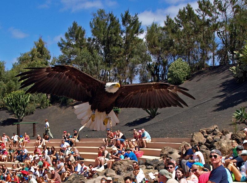 Aguila gradas llena