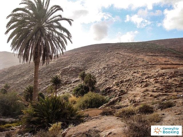Flora in Lanzarote