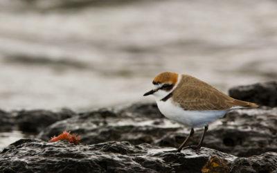 Ornithological tourism in Lanzarote