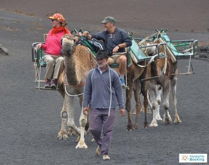 Camellos 1