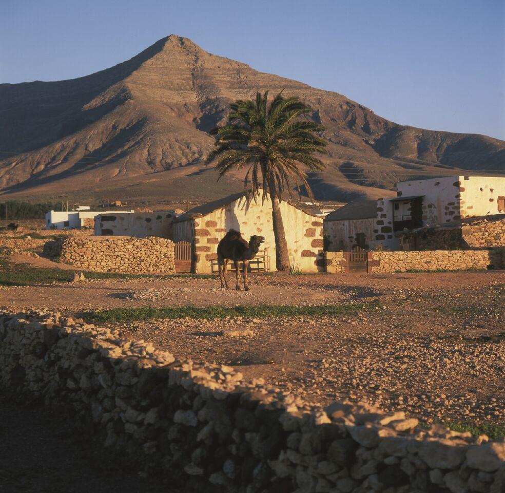 Tefía-paisaje-rural-fuerteventura-canary-trip-booking