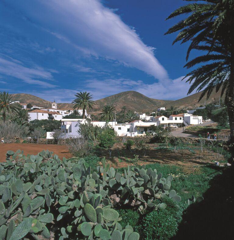 tuneras Valle Betancuria fuerteventura