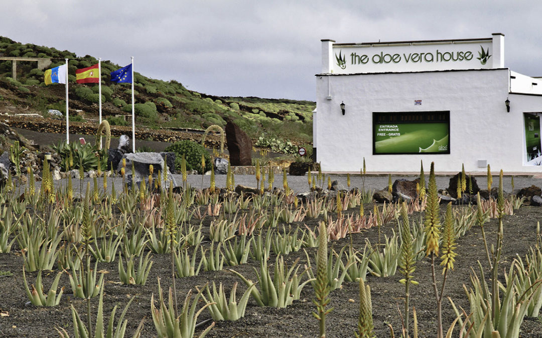 Canary Trip Booking colabora con Aloe Plus Lanzarote