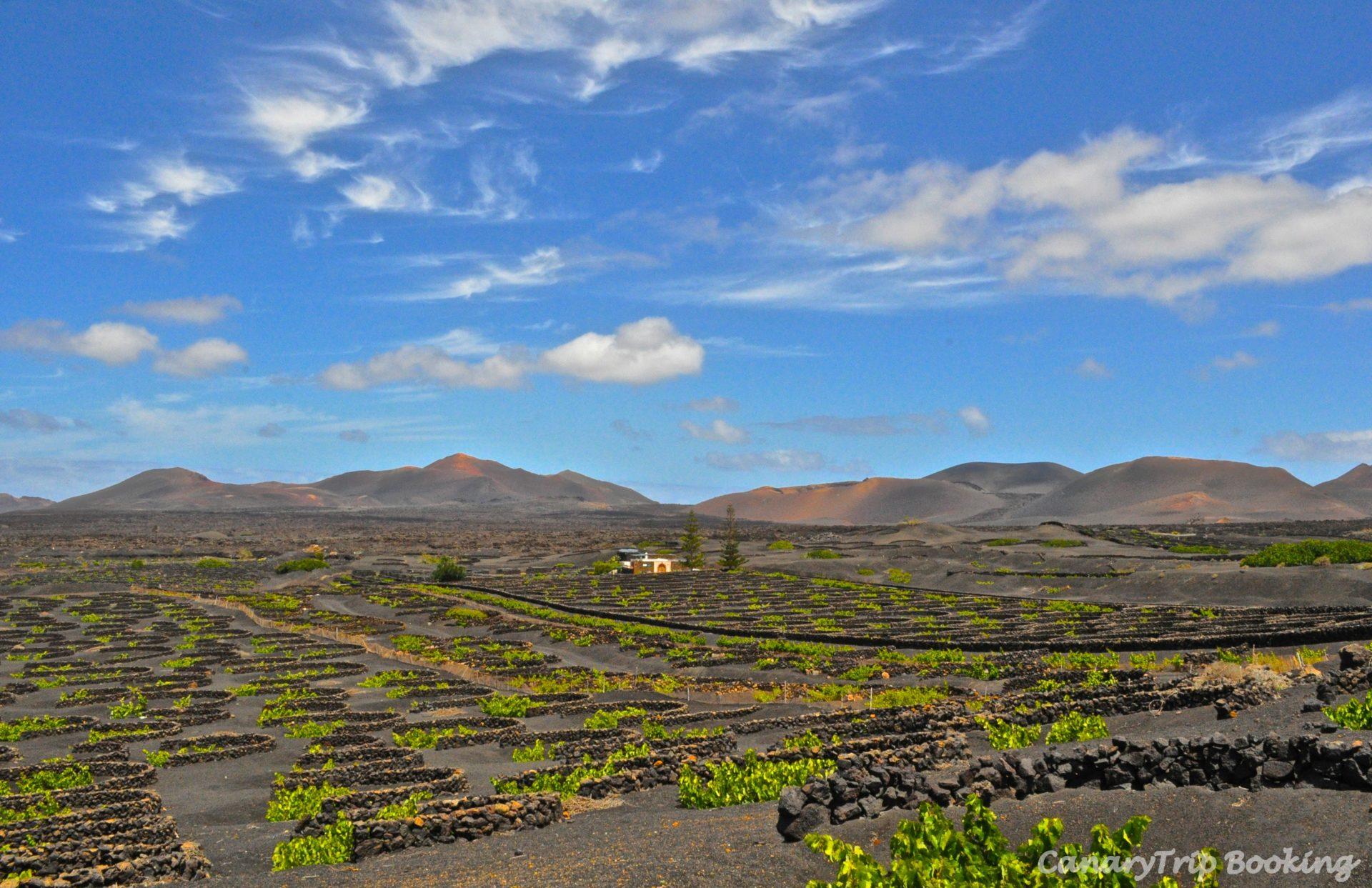 viñedos-la-geria-lanzarote-volcanes-canary-trip-booking