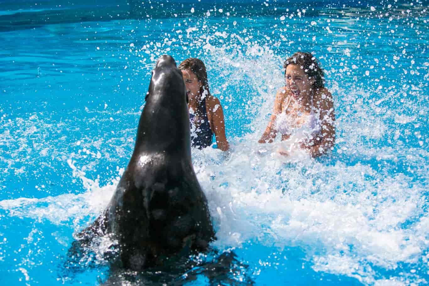 leones-marinos-Rancho-Texas-Lanzarote-Park-2