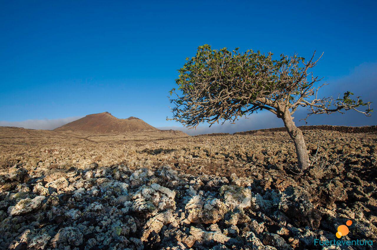 paisaje-interior-malpais-fuerteventura