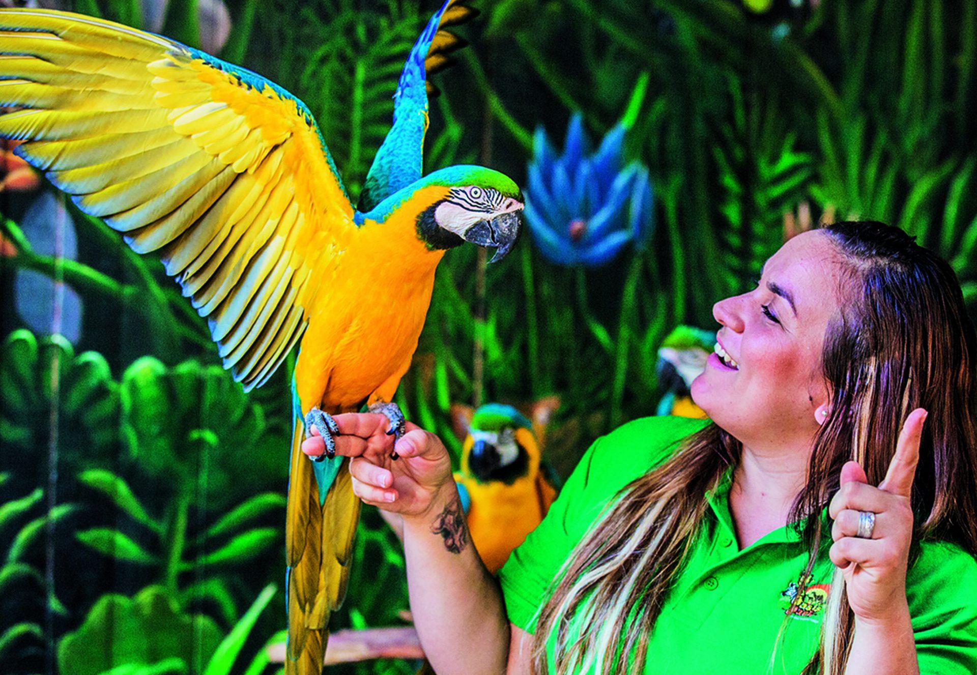 parrot live