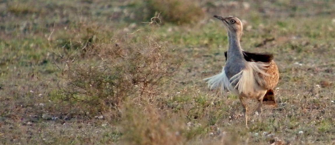 turismo-avistamiento-aves-hubara